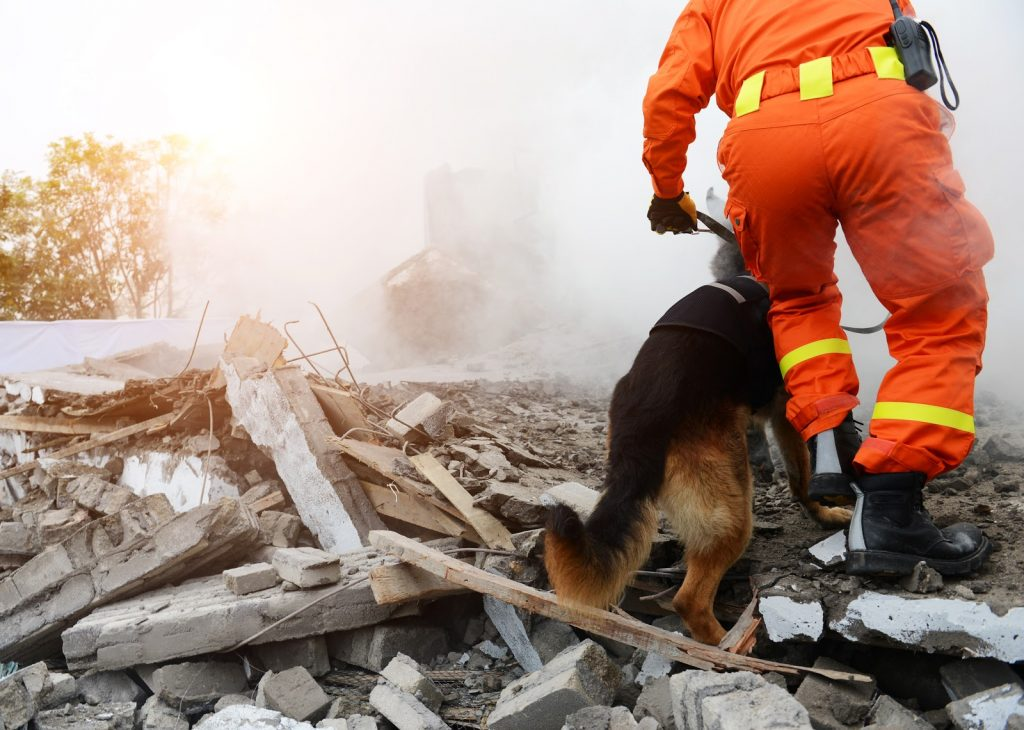 A man in orange searching through the wreckage of a s=destroyed house with a german shepherd trying to find survivors